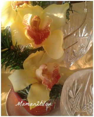 orchidée picm