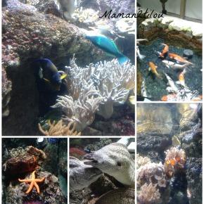 Comprendre et rêver en famille, la nouvelle exposition de l'Aquarium deParis