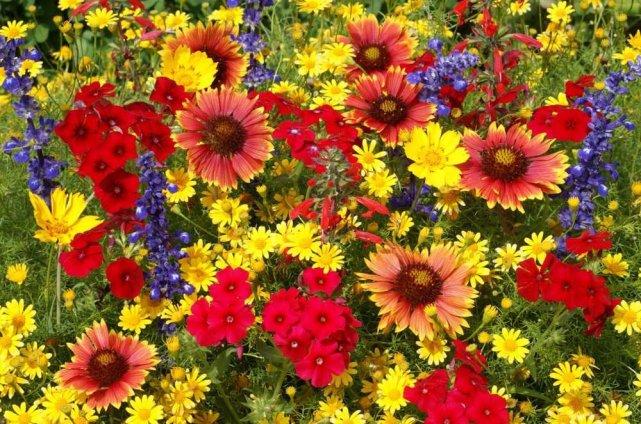 Des fleurs pour changer la vie … | Maman2Tilou