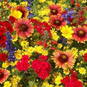 Des fleurs pour changer la vie…