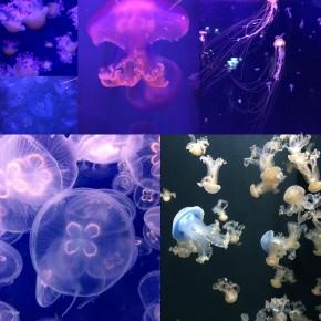 Une chouette sortie à l'Aquarium deParis